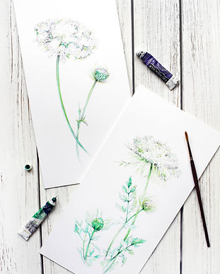Watercolor painting of Queen Anne's Lace, TayloredIllustration watercolor artist from Indianapolis IN