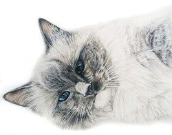 Local artist that can draw my cat, talented pet portrait artist