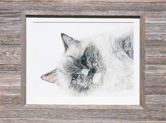 Pet Portrait - Mittens