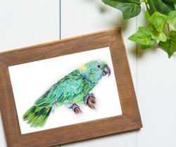 Custom Pet Portrait of a Cockatiel, Drawing of a green bird by TayloredIllustration. Taylor Walker o