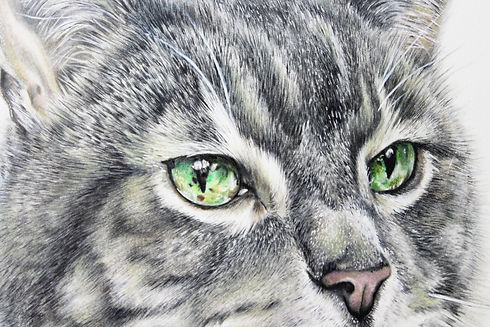 detailed custom pet portrait by TayloredIllustration, stunning colored pencil drawing of green cat eyes, hyperrealistic detailed custom pet portrait of a grey tabby