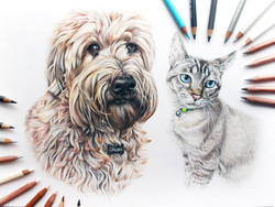 Double pet portrait of a cat and dog, Wheaton Terrier and Siamese cat pet portrait by Taylor Walker