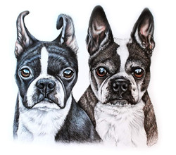 Double Pet portrait of 2 dogs by TayloredIllustration, 2 pets in 1 portrait, Portrait of 2 dogs toge