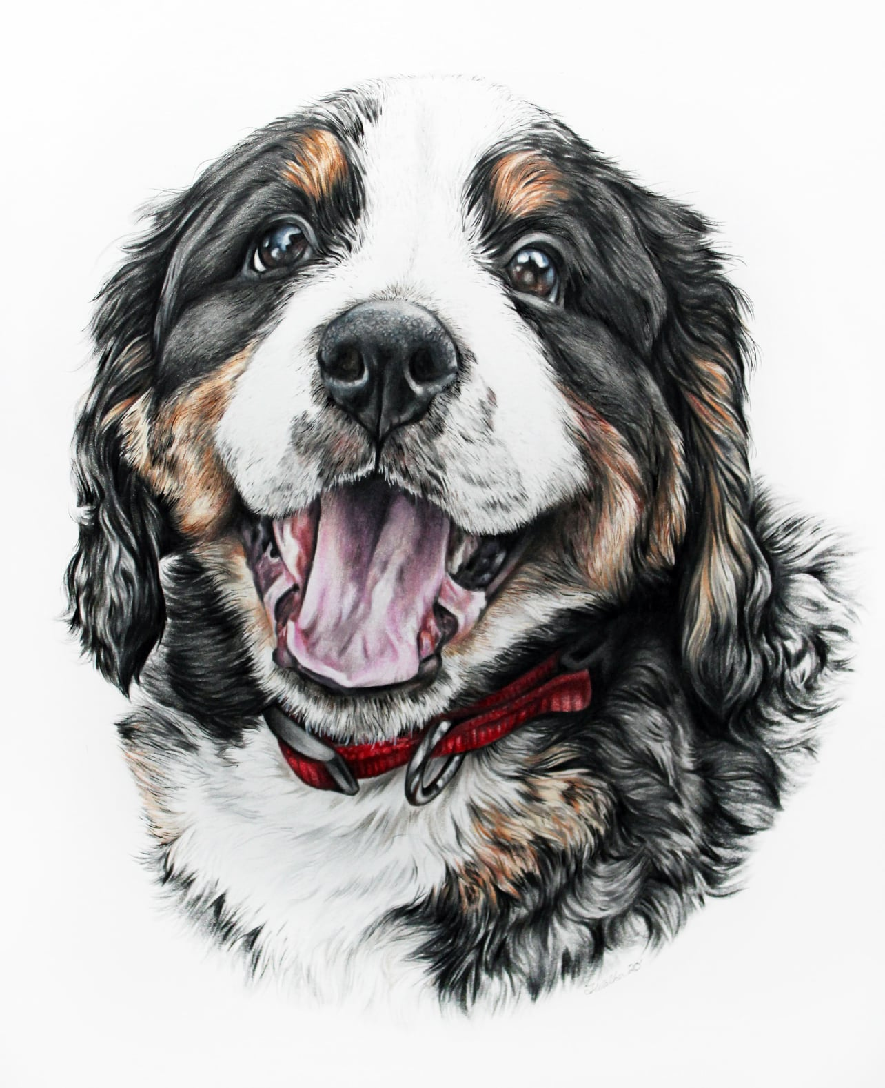 Hand Drawn Custom Pet Portrait of a Bernese Mountain Dog Puppy, TayloredIllustration,  Taylor Marie
