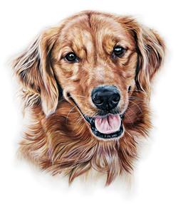 Red Golden Retriever Pet Portrait, Commission a Photorealistic Pet Portrait by TayloredIllustration