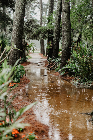 A little rain on your wedding day makes for some swoonworhy wedding photography. LSU Burden center and botanic gardens. Floral design by Michelle Pierce for The Sentimental Petal. Photography by Emily Greene Photography, Baton Rouge, Louisiana Copyright 2019