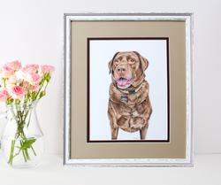 Double Matted Portrait of Chocolate Labrador Retriever