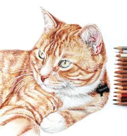 Photorealistic Pet Portrait of Ginger Cat, Detailed Colored Pencil Pet Portrait by TayloredIllustrat