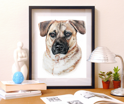 10x12 pet portrait of my dog. Taylor Walker is a local Indianapolis Fine Artist and Illustrator spec