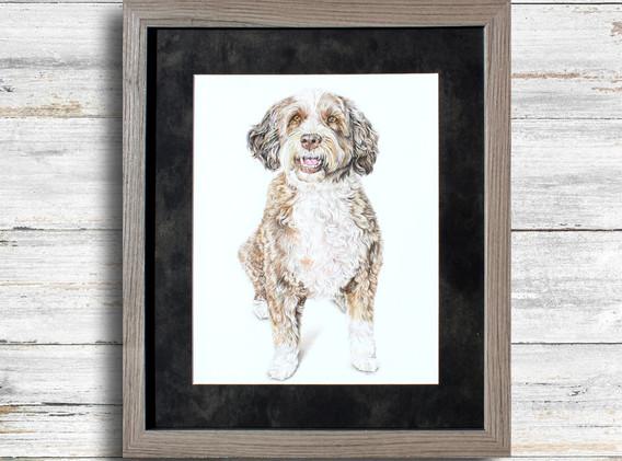 Pet Portrait - Jenny