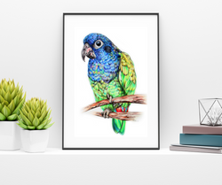 Commission an artist to draw my bird, local Indiana artists that draw pets, Indiana pet portrait art