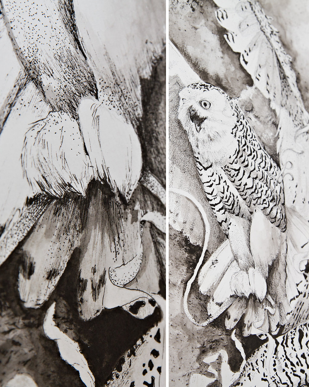 Detailed drawing of great snowy owls