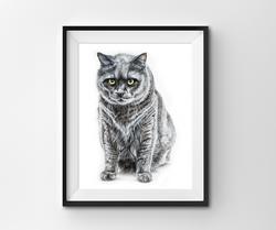 pet portrait of grumpy grey cat