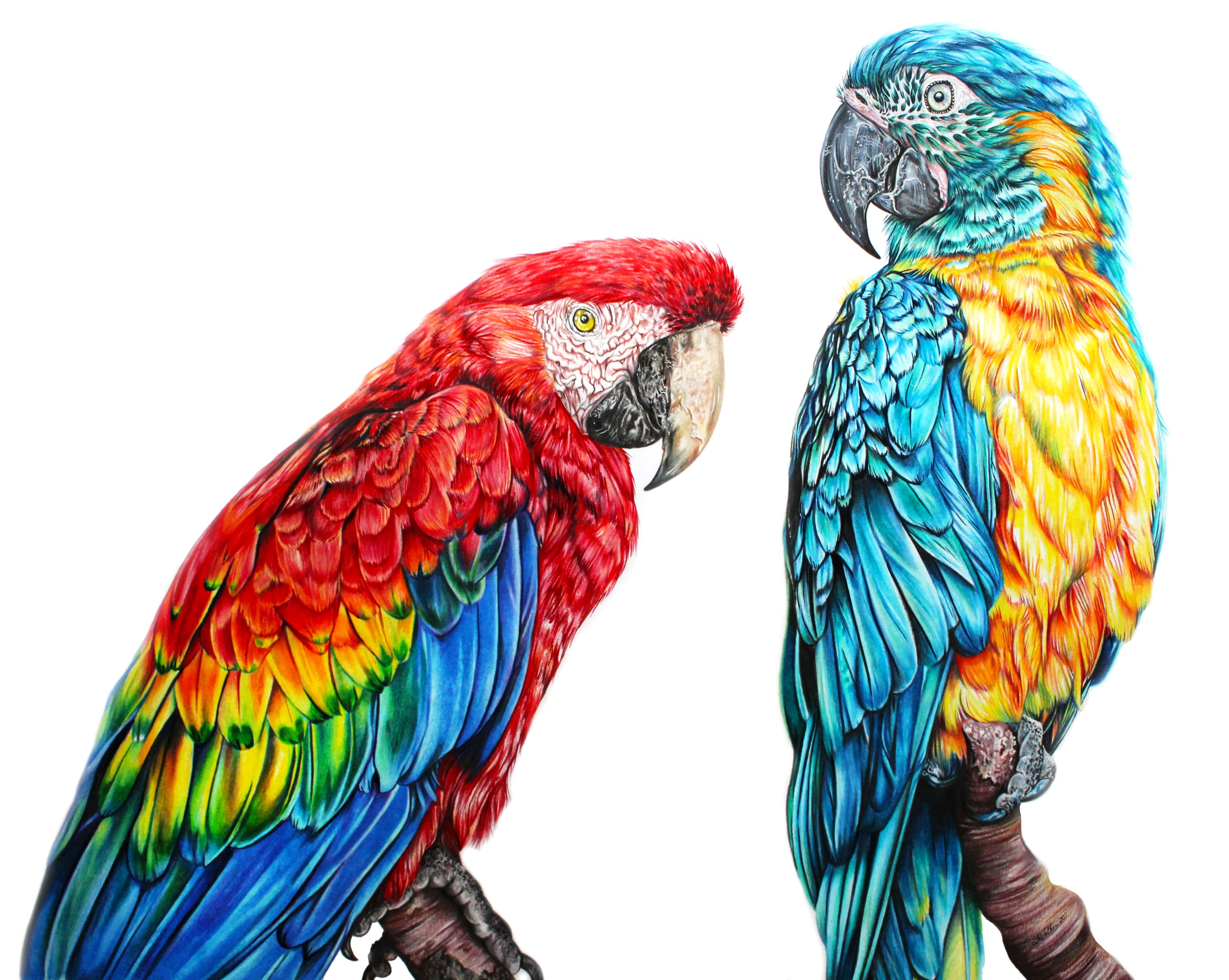 """Prism"" Scarlet & Blue Throated Macaw Fine Art"