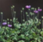PoppyDrama II.jpg