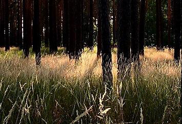 Rapé tief im Wald