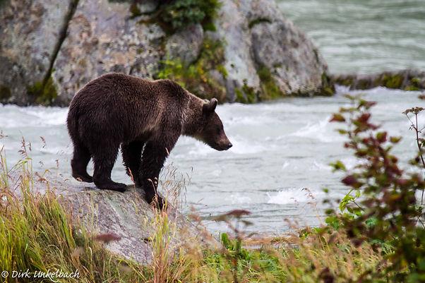 Animalspirit Bär, Tulukkap Anersaava