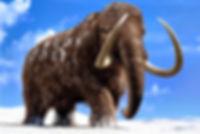 Krafttier Mammut - Tulukkap Anersaava