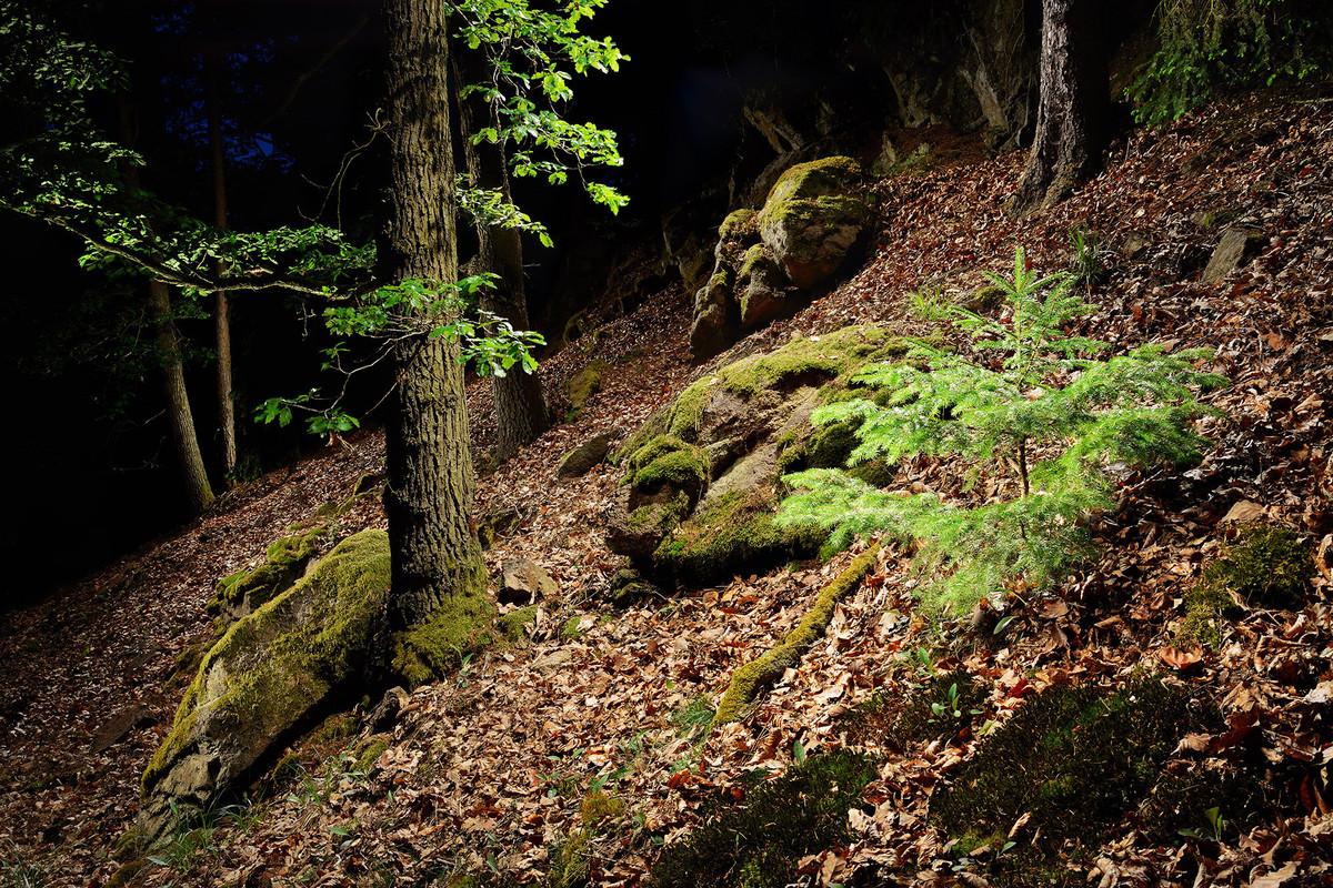 Lesní stráň.jpg
