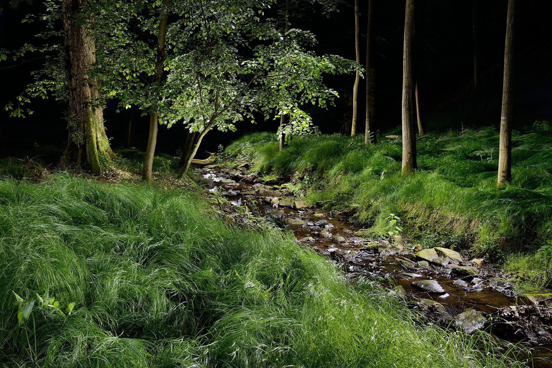 Lesní tráva.jpg