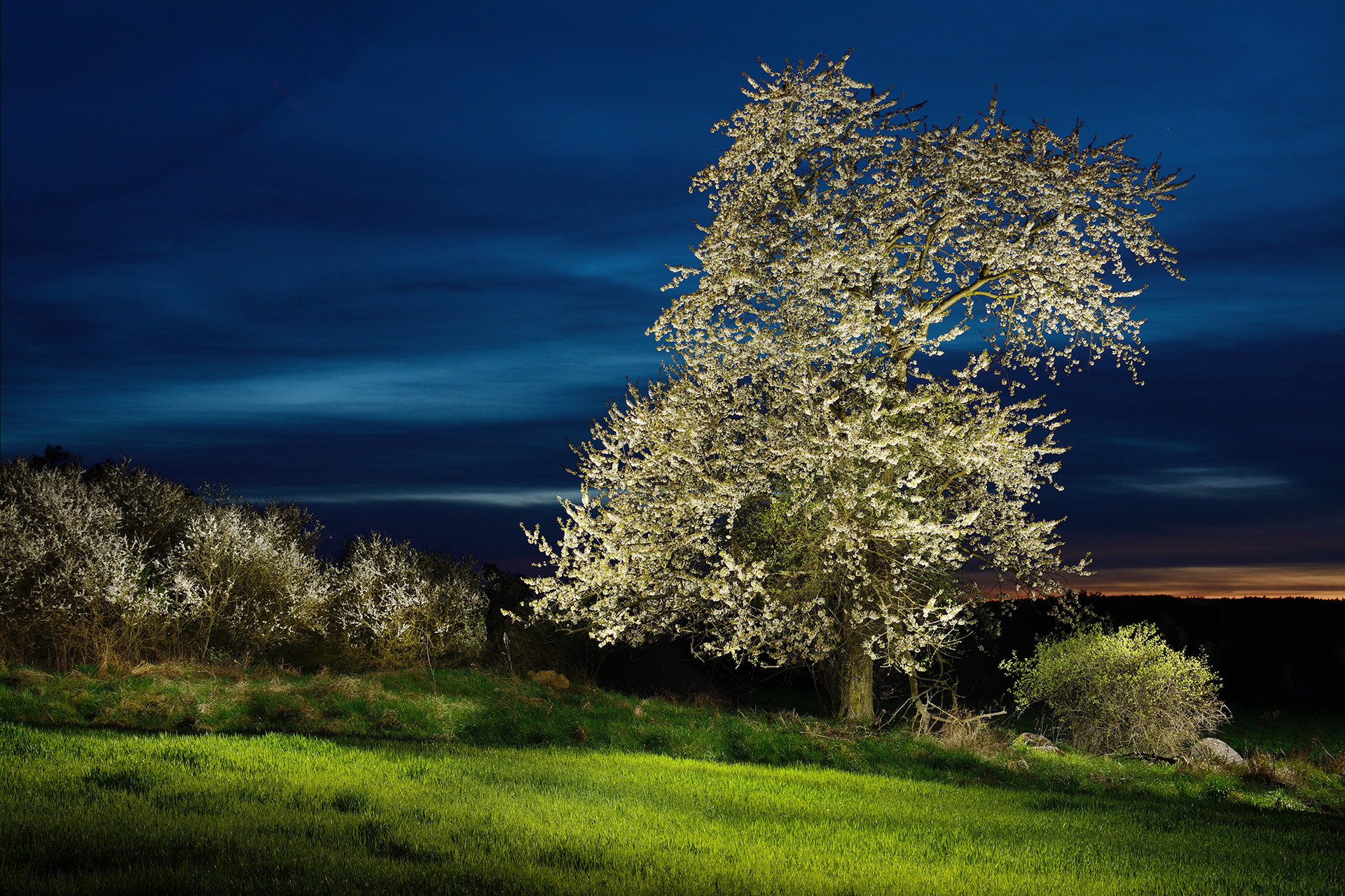 Kvetoucí_strom.jpg