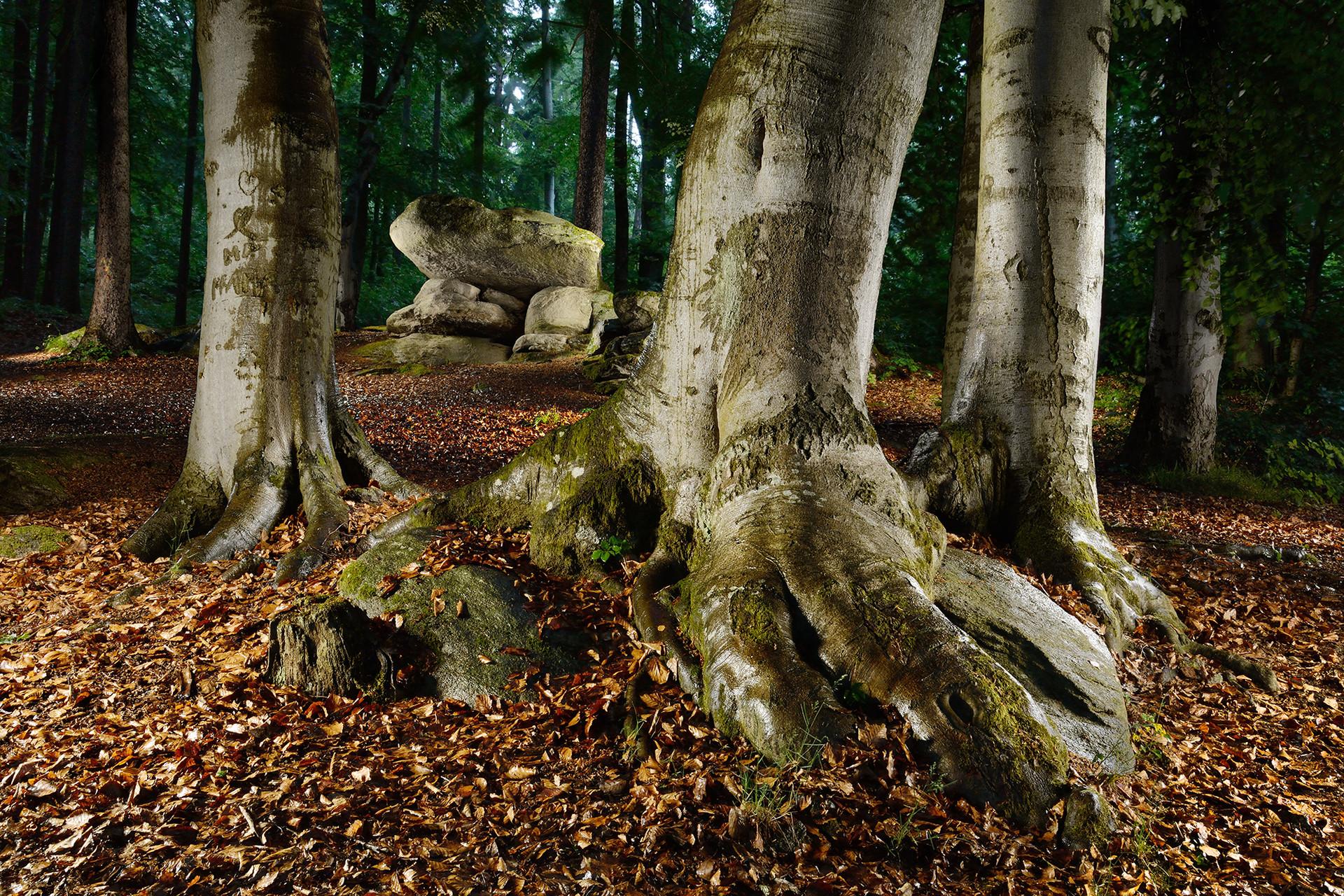 Stromy a kameny.jpg