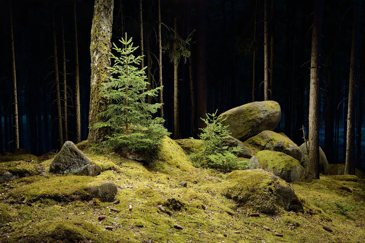 Stromy a kameny 2000.jpg