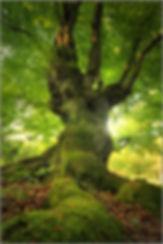 poster-zauberbaum-336912.jpg