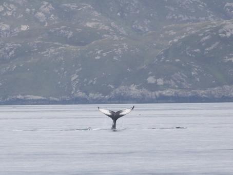 A Scottish wildlife cruise to remember!