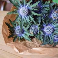bouquet de chardons
