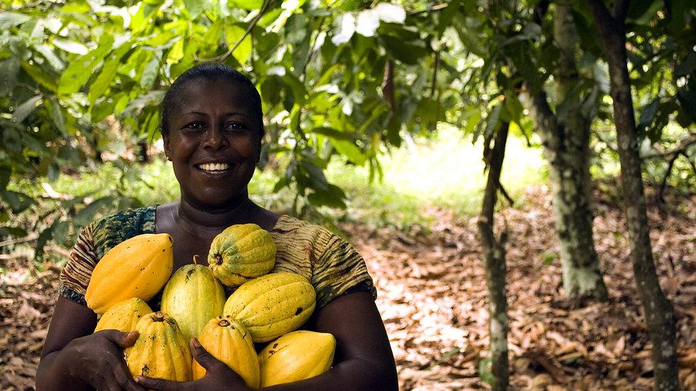 Kakaobäume für eine Familie!