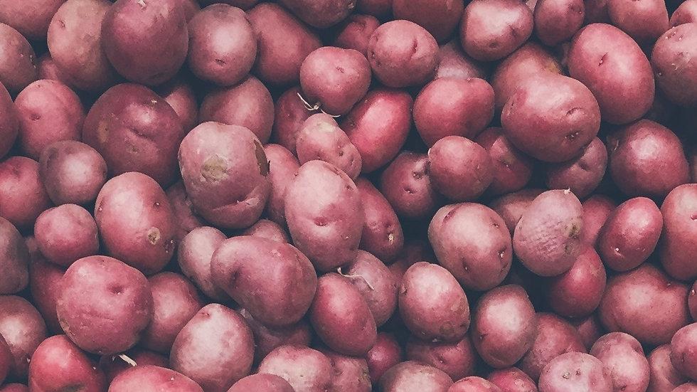 5 x Aussaat für Kartoffeln