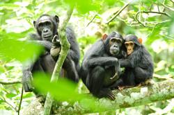 Chimp5