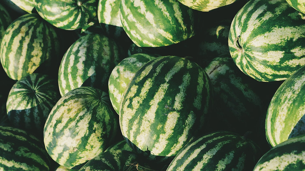 30 x Aussaat für Wassermelonen
