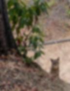 bobcat2_edited.jpg