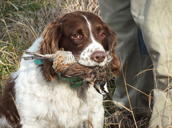 Clay with quail