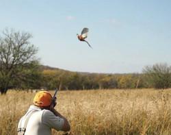wingshooting