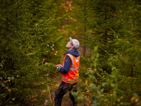 Stora Enso joins WWF's Forests Forward impact platform