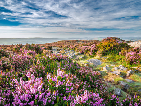 Help bring Stiperstones National Nature Reserve back to purple