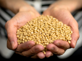 Stora Enso invests in Competence Centre and diversifying raw material base for biocomposites