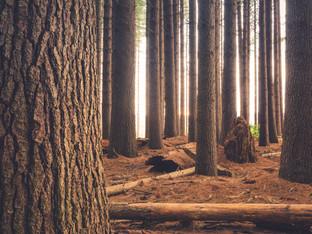BillerudKorsnäs scored A for protecting forests