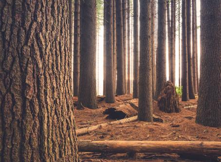 Forests: BillerudKorsnäs scored A for protecting forests