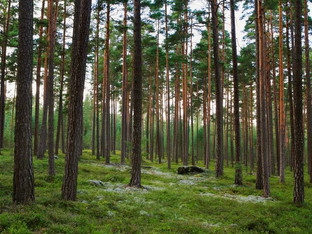 Stora Enso signs agreement to acquire forest assets in Bergvik Skog