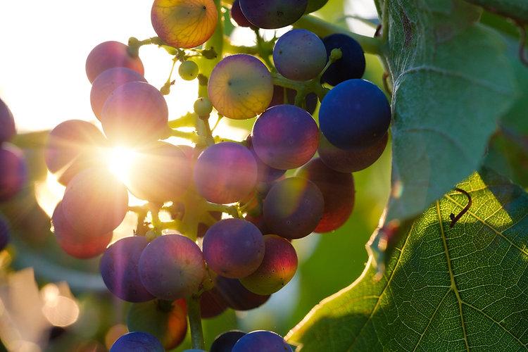 grapes-3550742_1920.jpg