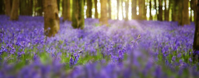 Blue-bell-wood-surrey-WAITLIST.jpg