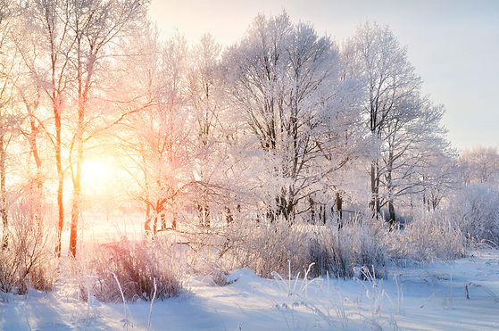 Winter landscape - frosty trees in snowy