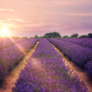 Mayfield-lavender-farm.jpg