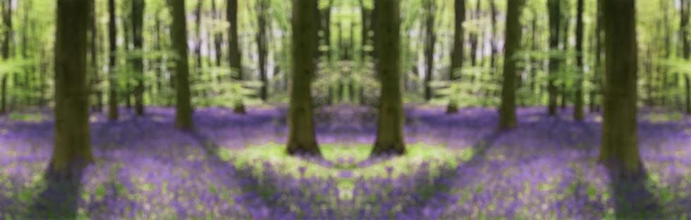 bluebell-landscape.jpg