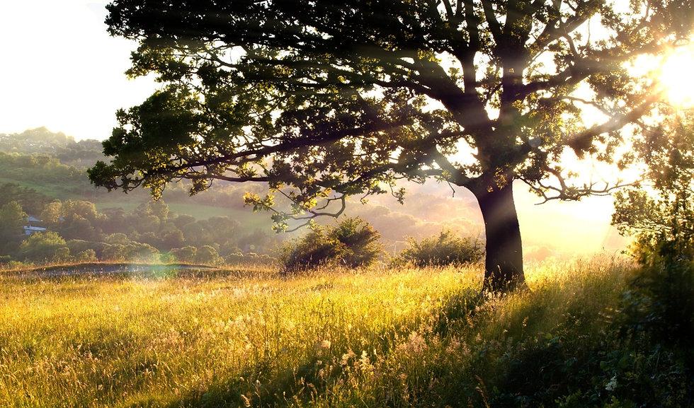 Long grass and tree in morning light_edited.jpg