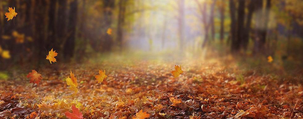 Autumn-woodland-what-to-wear.jpg